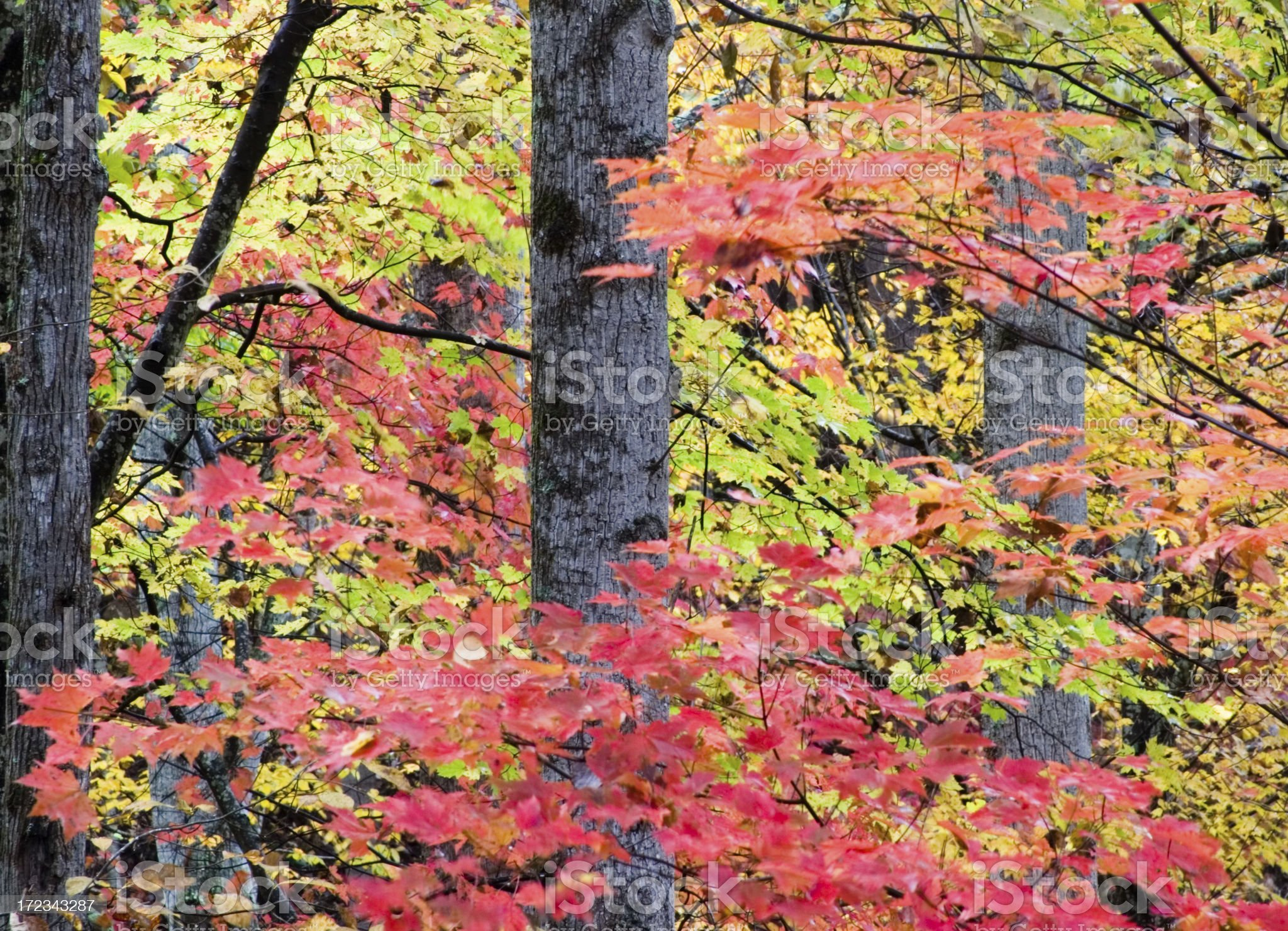 The Colors of Autumn royalty-free stock photo
