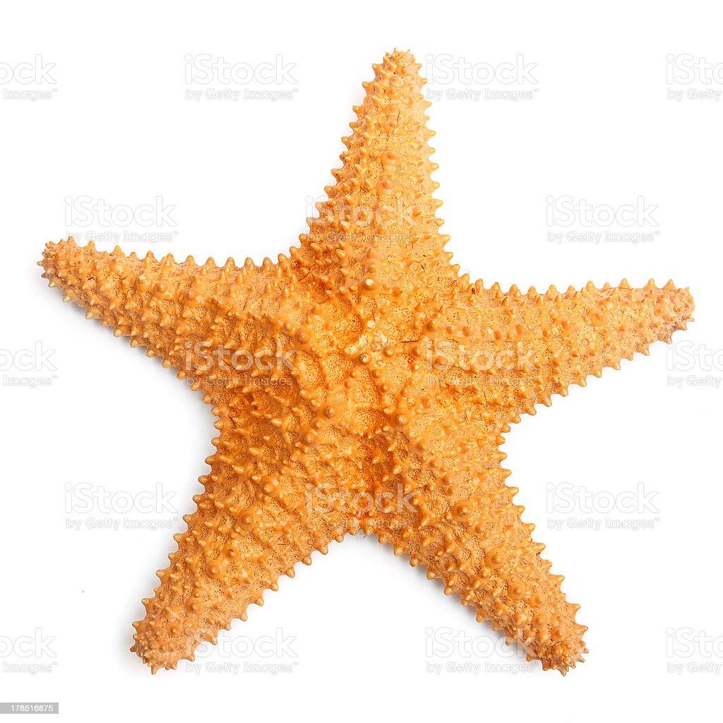 The common Caribbean starfish. stock photo