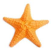 The common Caribbean starfish.