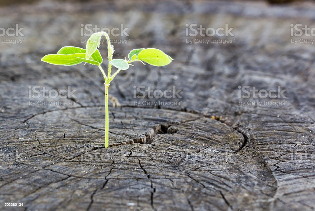 The concept of business growth stock photo