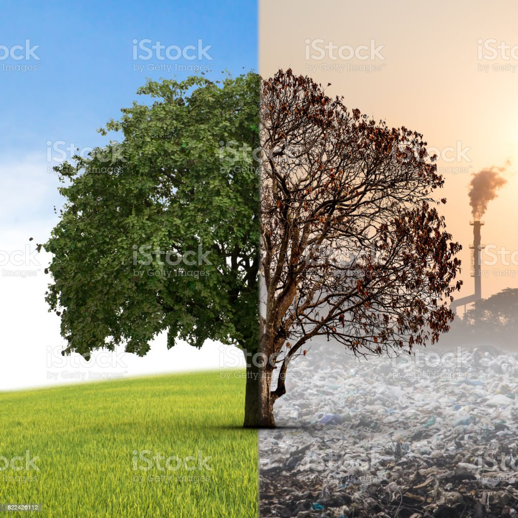 The concept of climate has changed. Half alive and half dead tree standing at the crossroads. The concept of world love and clean energy stock photo