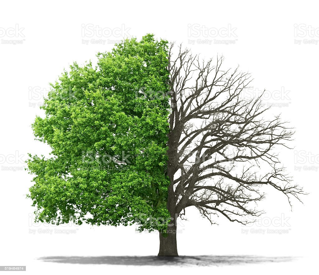 The concept of the dead and the living tree stock photo