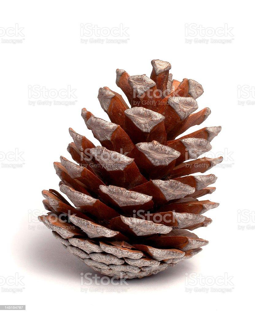 O cone. foto royalty-free