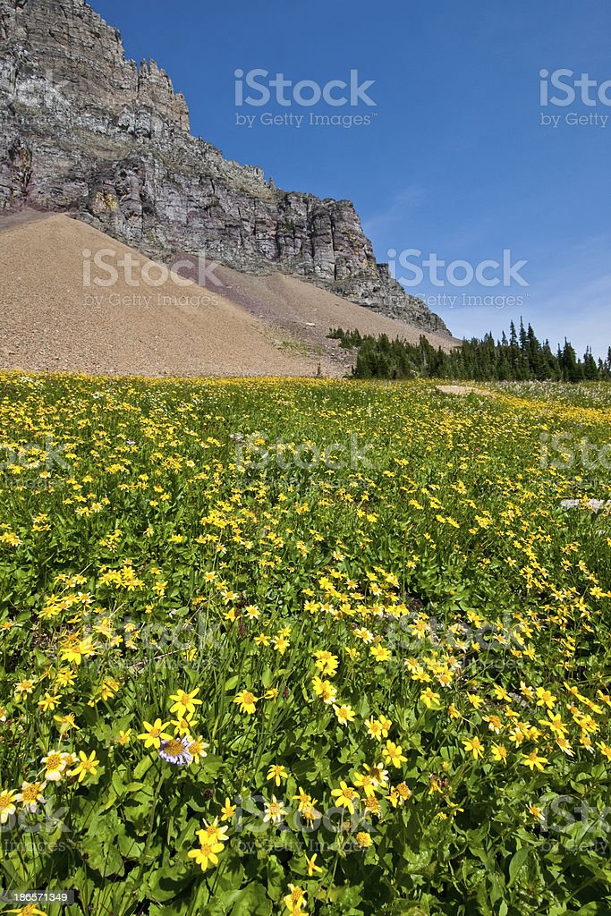 Meadow of Wildflowers Below Mount Clements royalty-free stock photo