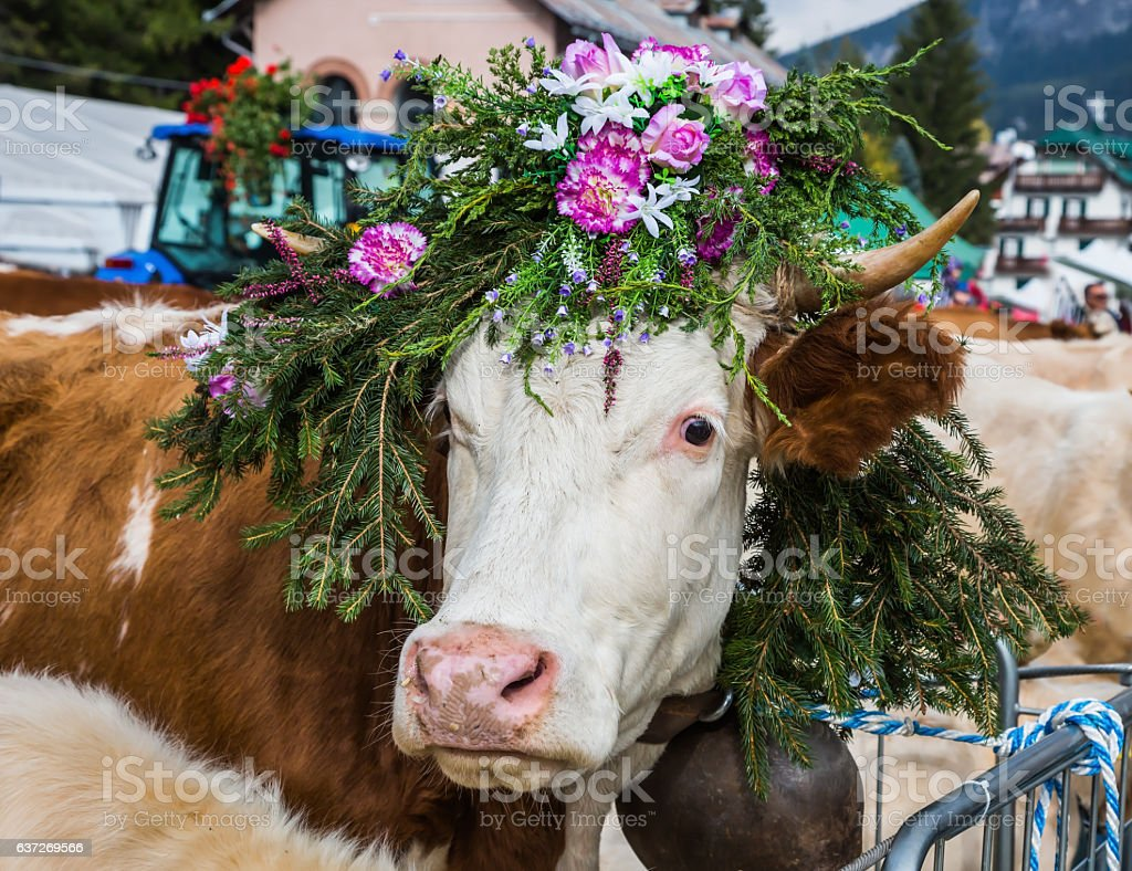 The cow is decorated with flowers stock photo