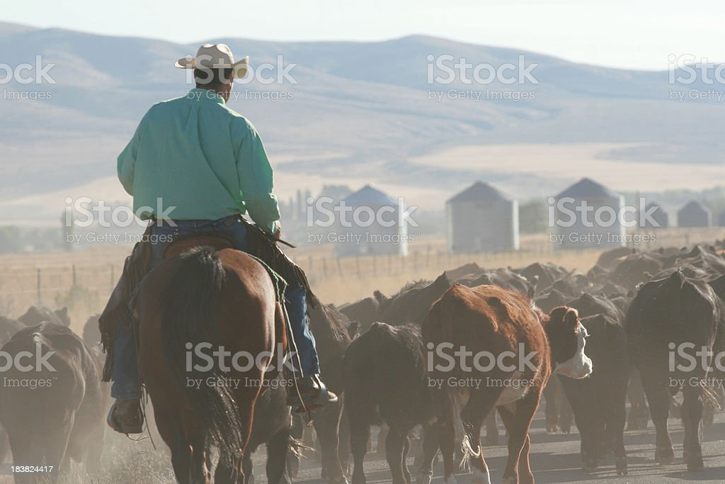 the cowboy way stock photo
