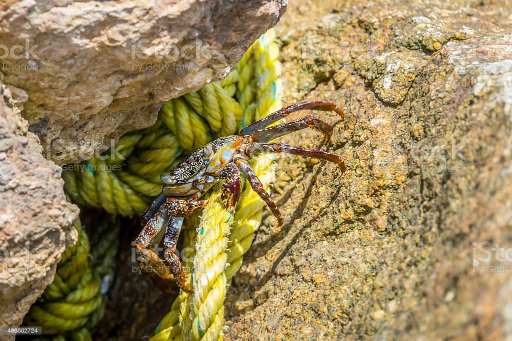 The crab and the rope stock photo