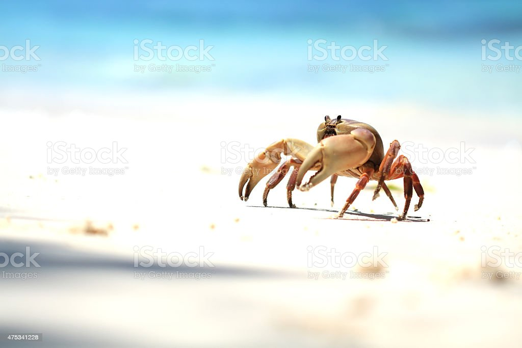The  Crab on the Beach royalty-free stock photo