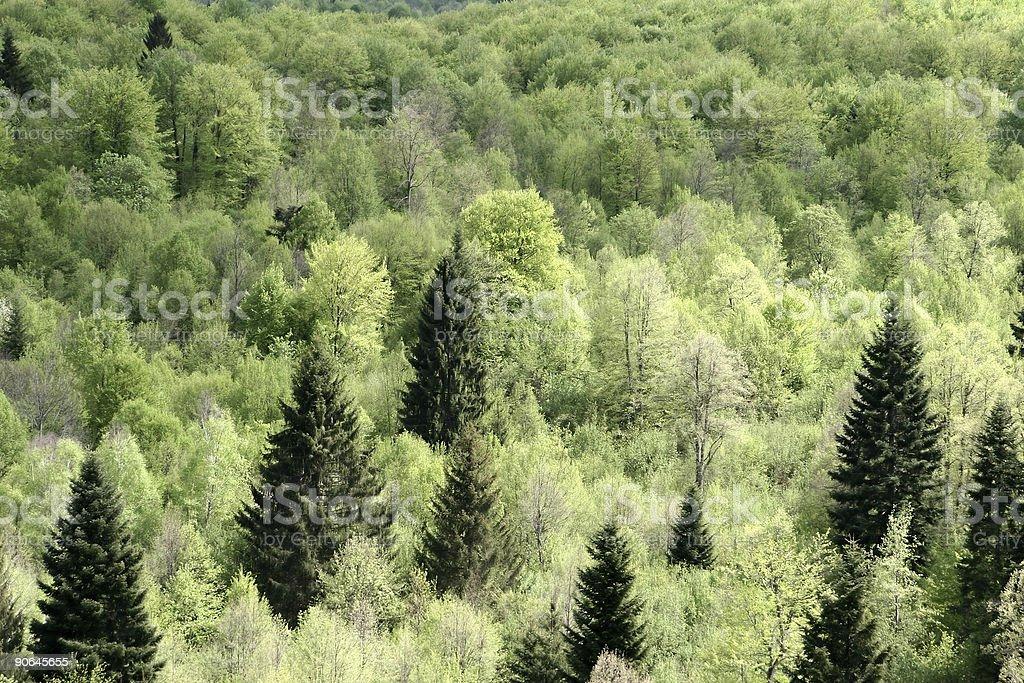the croatian green royalty-free stock photo