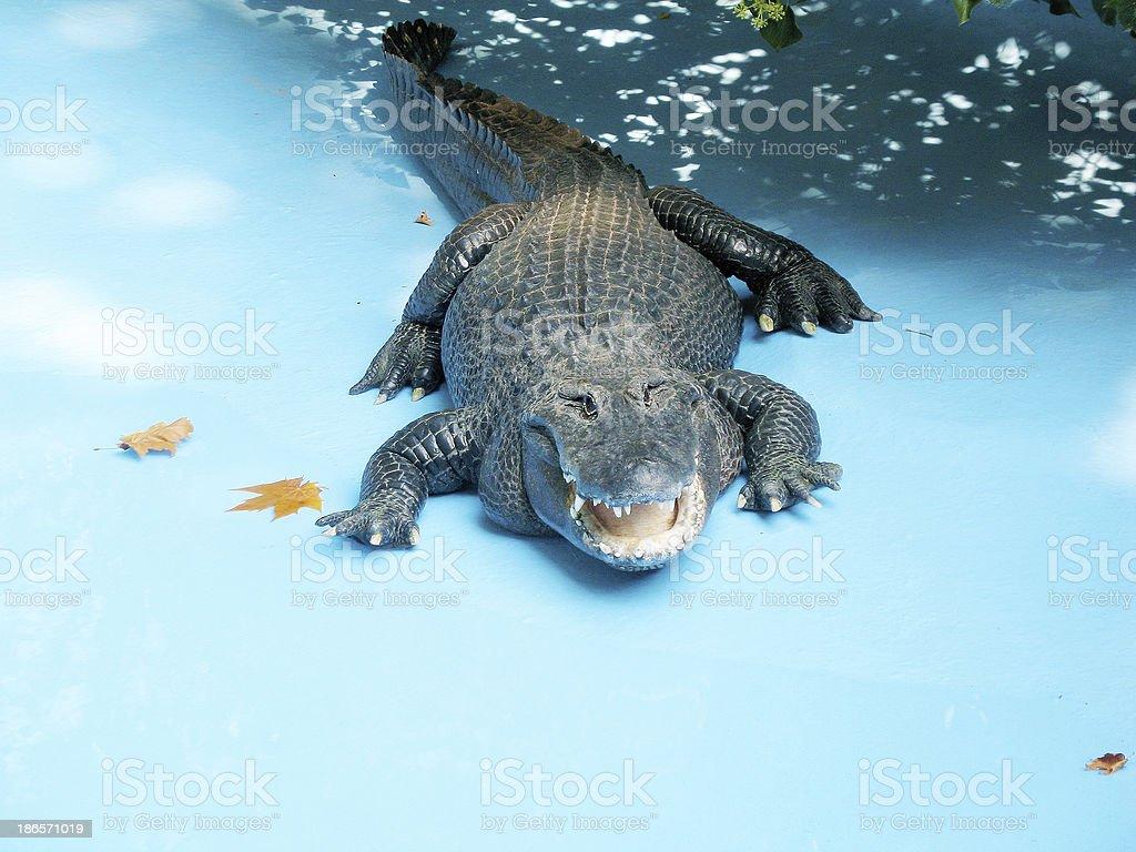 The crocodile royalty-free stock photo