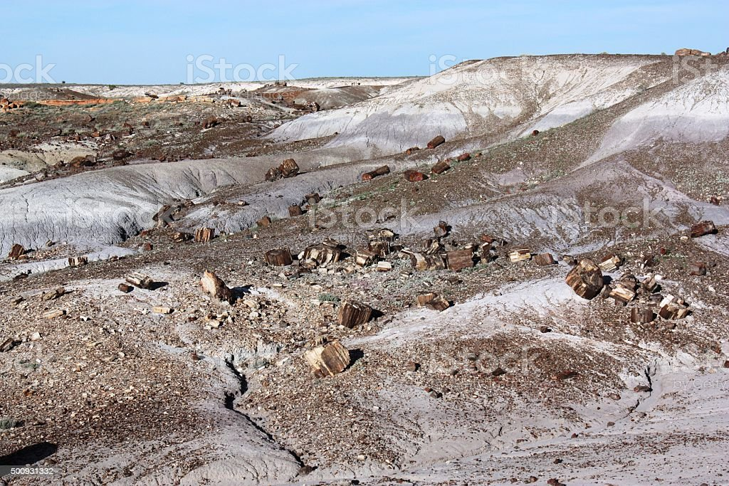 The Crystal Forest in Petrified Forest National Park, Arizona USA stock photo