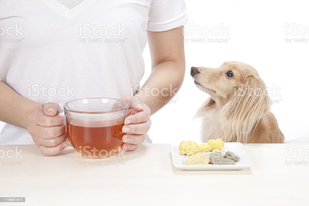 The dachshund with a woman royalty-free stock photo