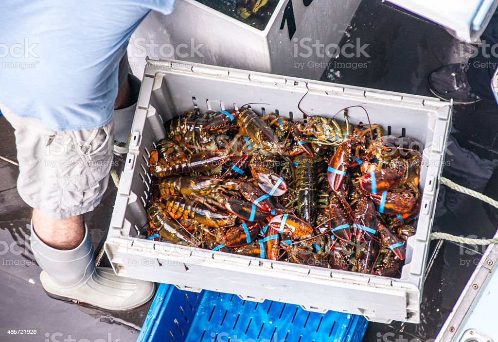 The Daily Lobster Catch stock photo