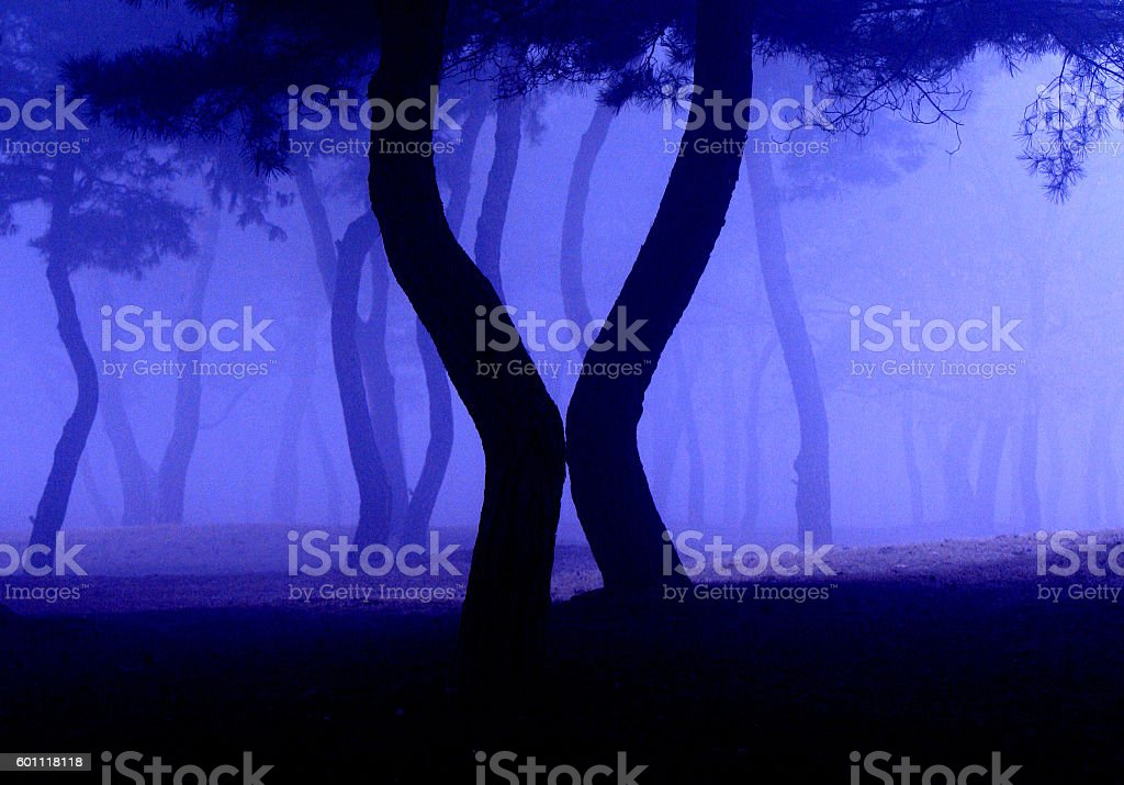 The Dancing Forest stock photo