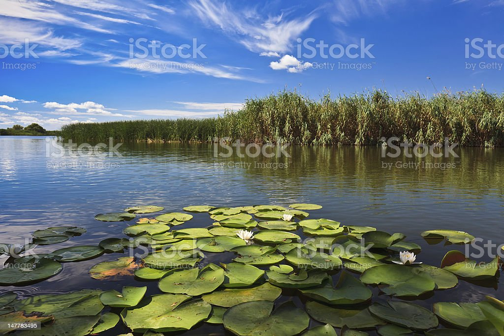 The Danube Delta with lily pads in Romania stock photo