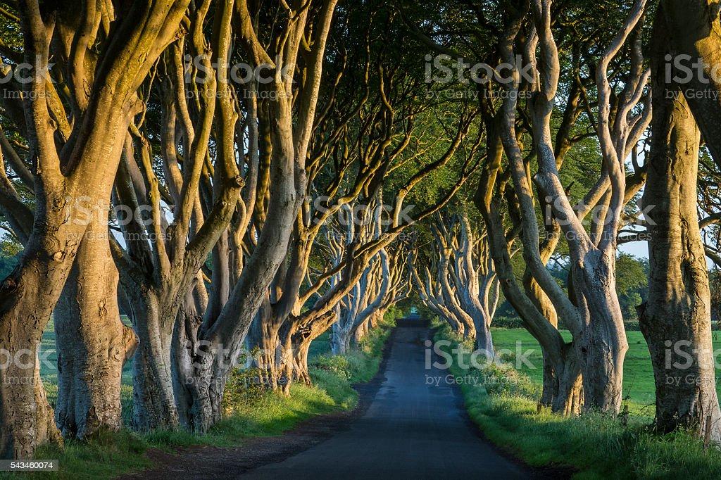 The Dark Hedges - County Antrim - Northern Ireland stock photo