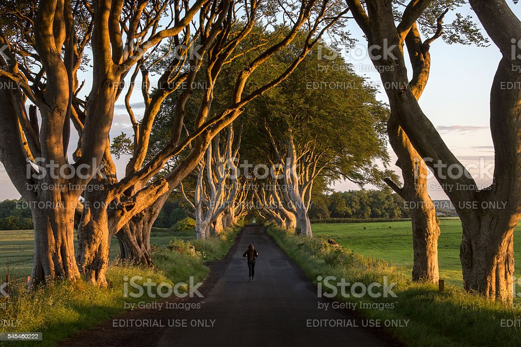 The Dark Hedges - County Antrim - Northern Ireland stock photo