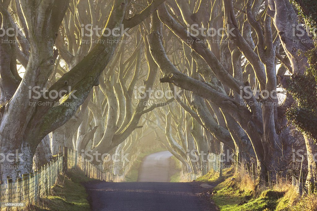 The Dark Hedges from County Antrim, Northern Ireland stock photo