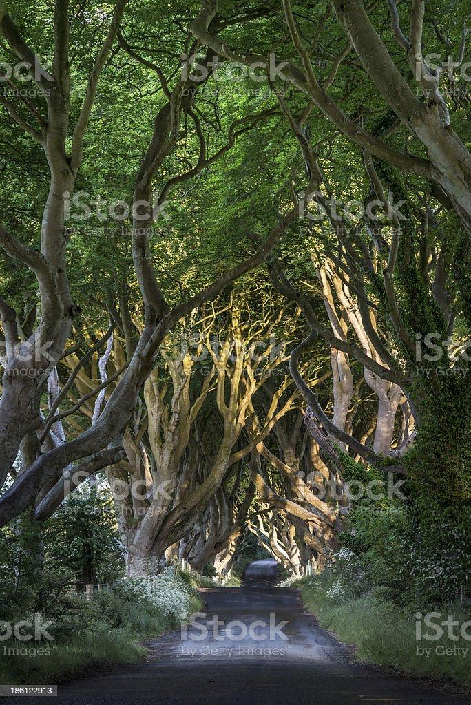 The Dark Hedges, North Irland stock photo