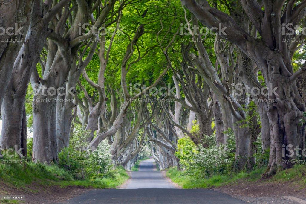 The Dark Hedges, Northern Ireland stock photo