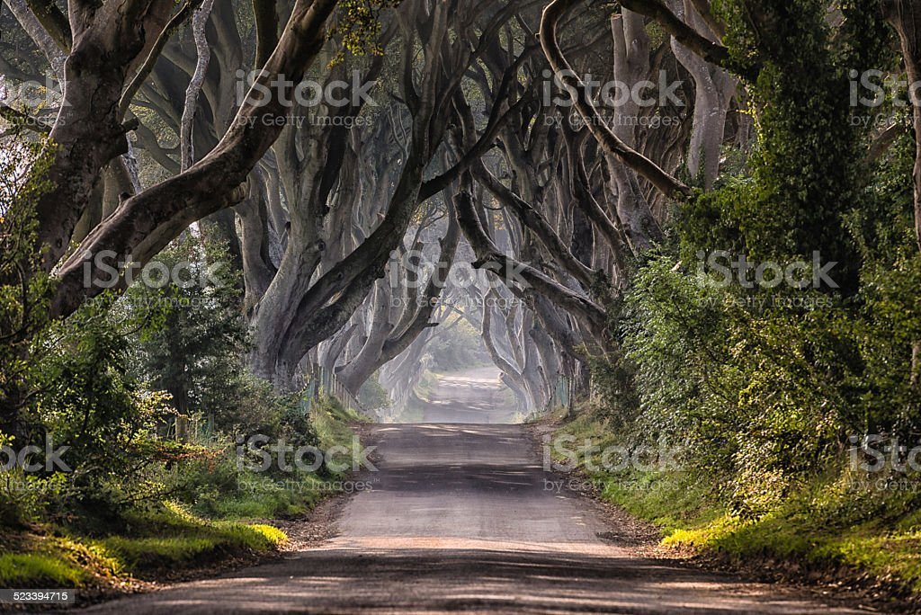 The Dark Hedges stock photo
