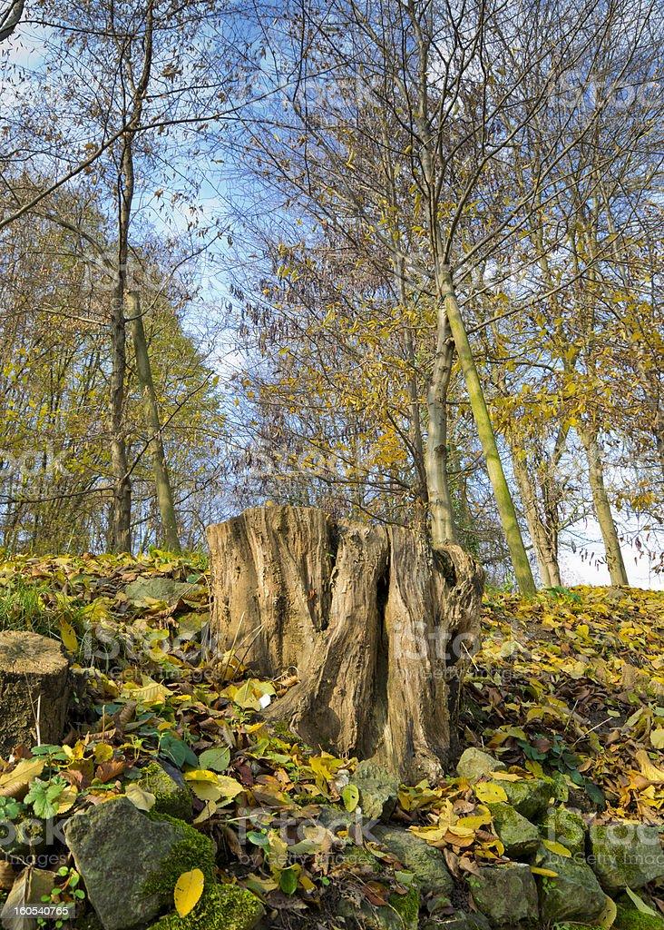 The dead tree royalty-free stock photo