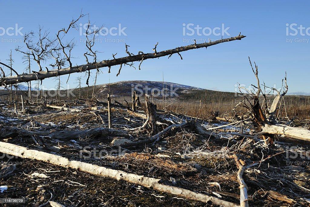 The dead trees stock photo