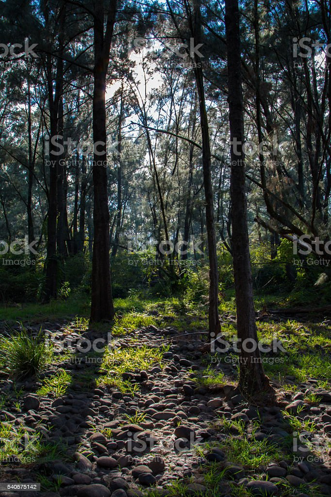 The deep forest stock photo