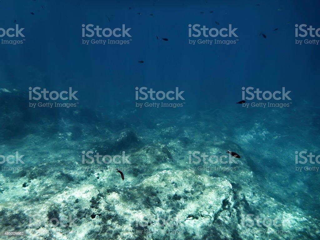 The Deep stock photo