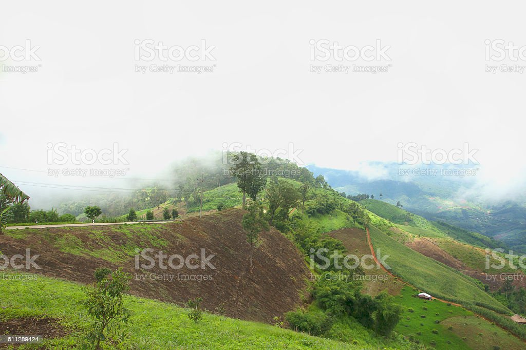 The deforestation for cultivation of agriculture on the mountain stock photo