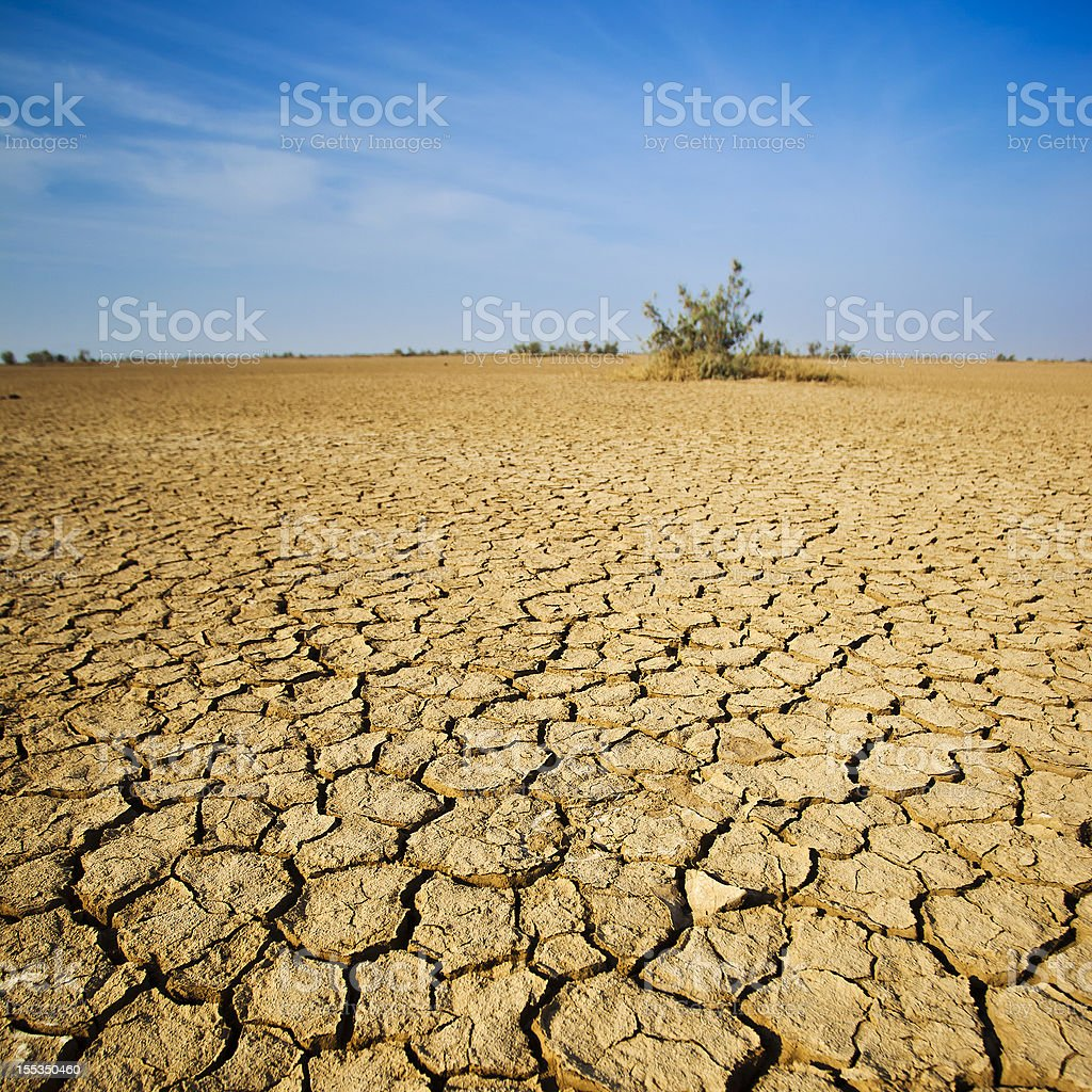 The Desert In Western India stock photo