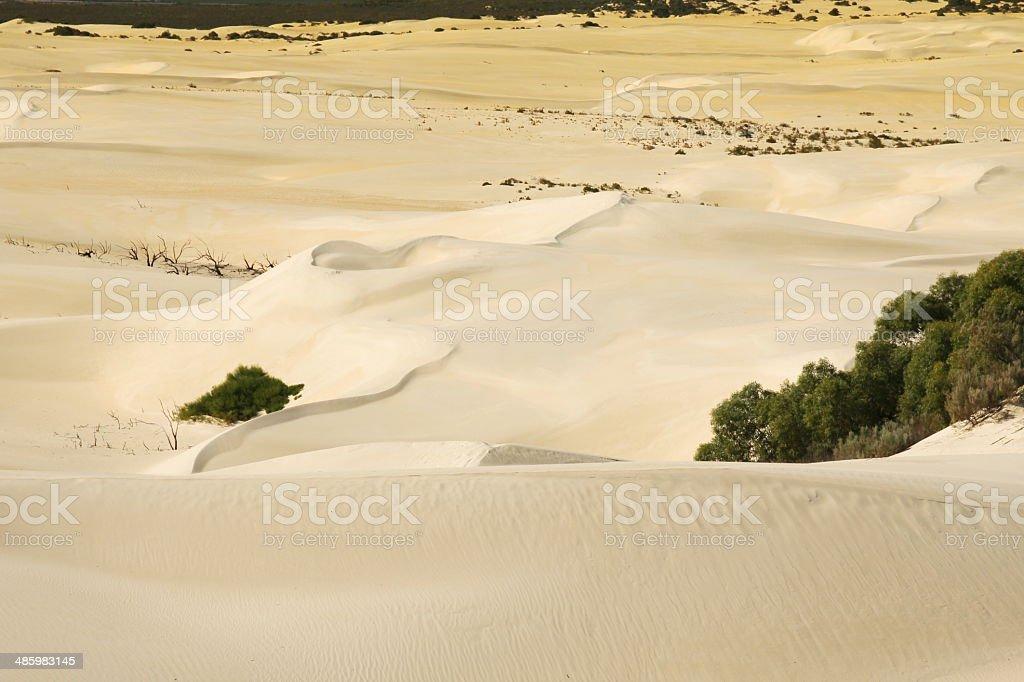 The Desert stock photo