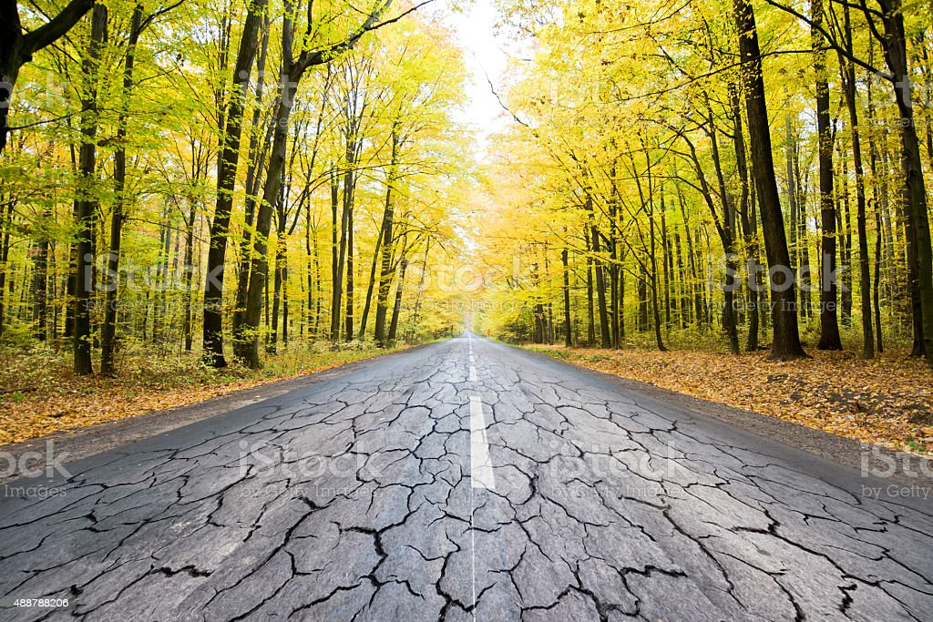 the destroyed road in forest stock photo