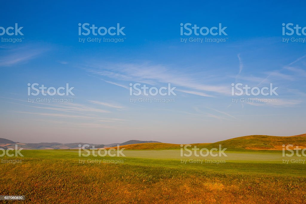 The detail of green field at sunrise stock photo