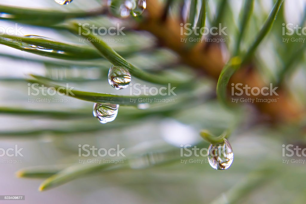 the dew on branches stock photo