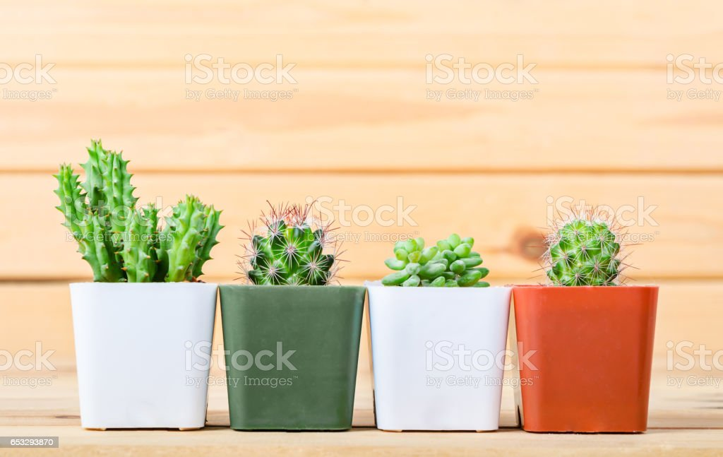 The difference cactus in pot stock photo