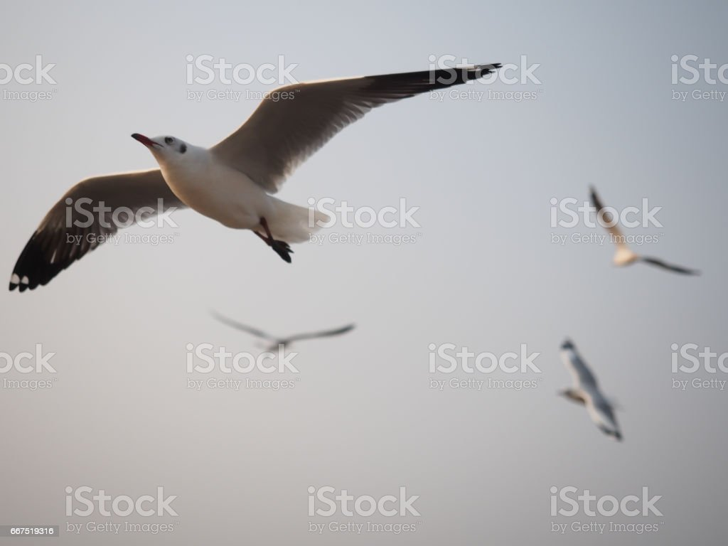The discretion of the birds flying in the sky. stock photo