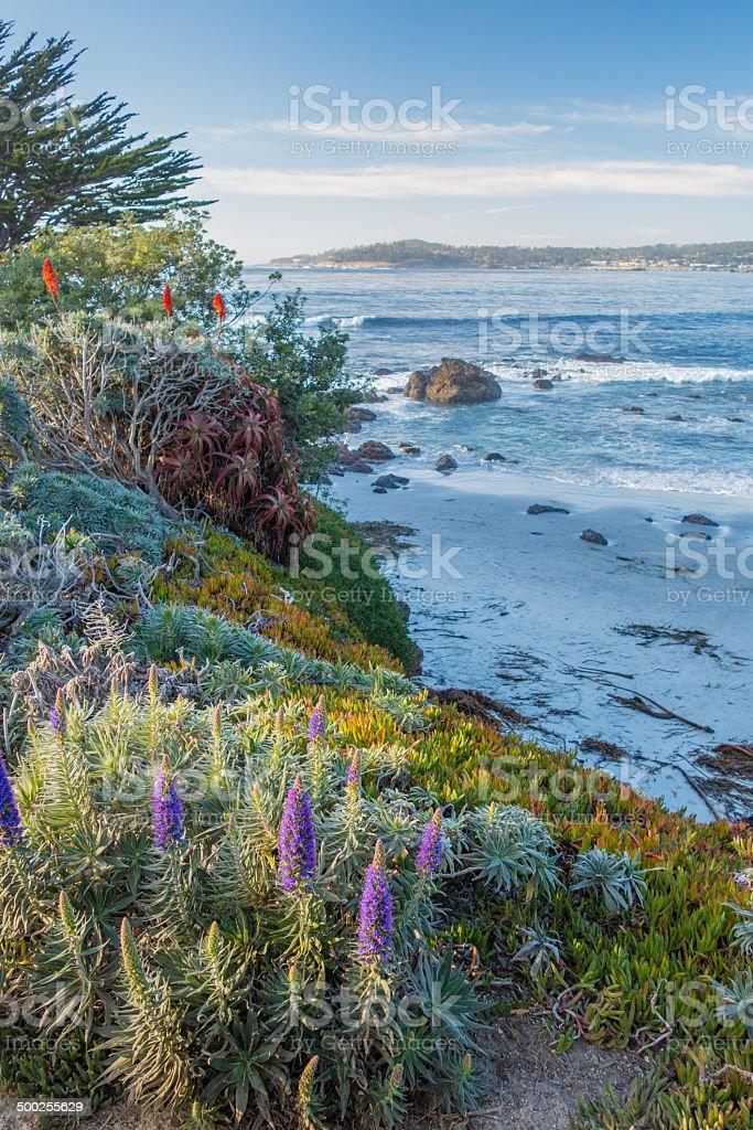 The diverse coast of California stock photo