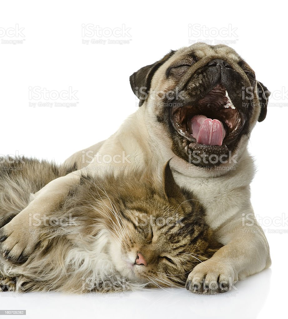 the dog and cat lie together royalty-free stock photo