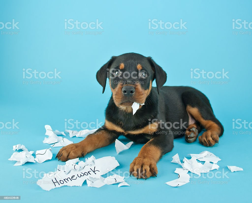 The Dog Ate My Homework!!! stock photo
