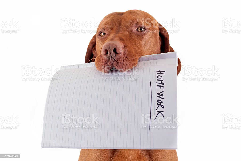 the dog ate my homework stock photo