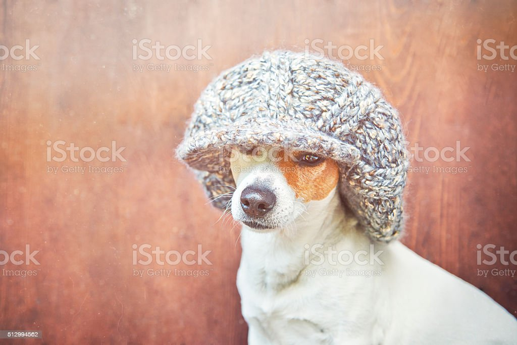 The dog in a warm knitted hat royalty-free stock photo