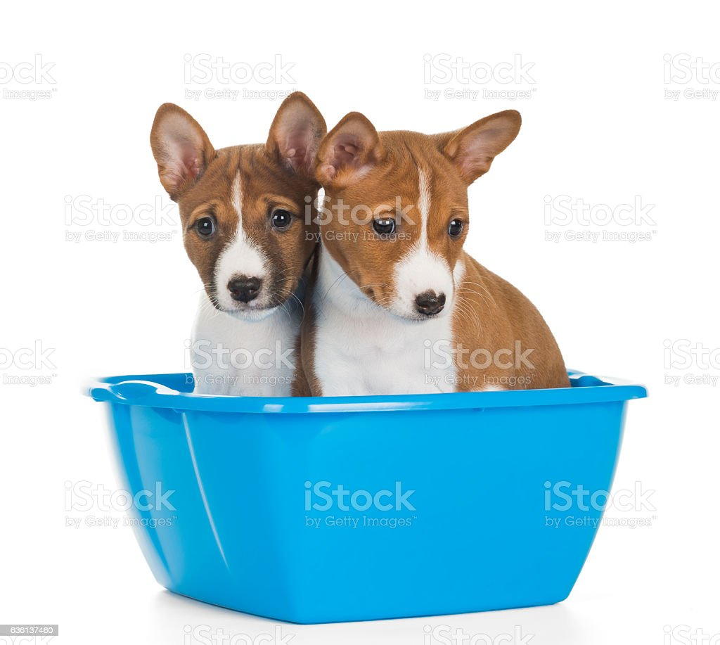 the dog in the basin stock photo