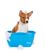the dog in the basin