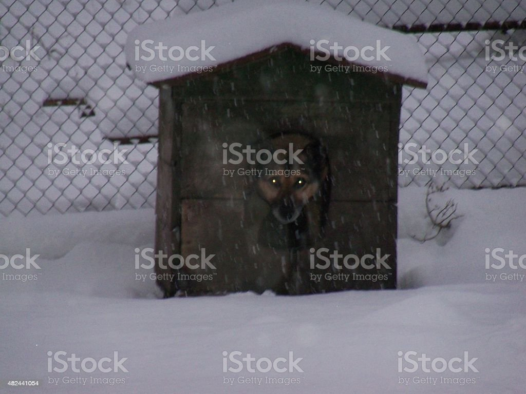 The dog in the booth stock photo