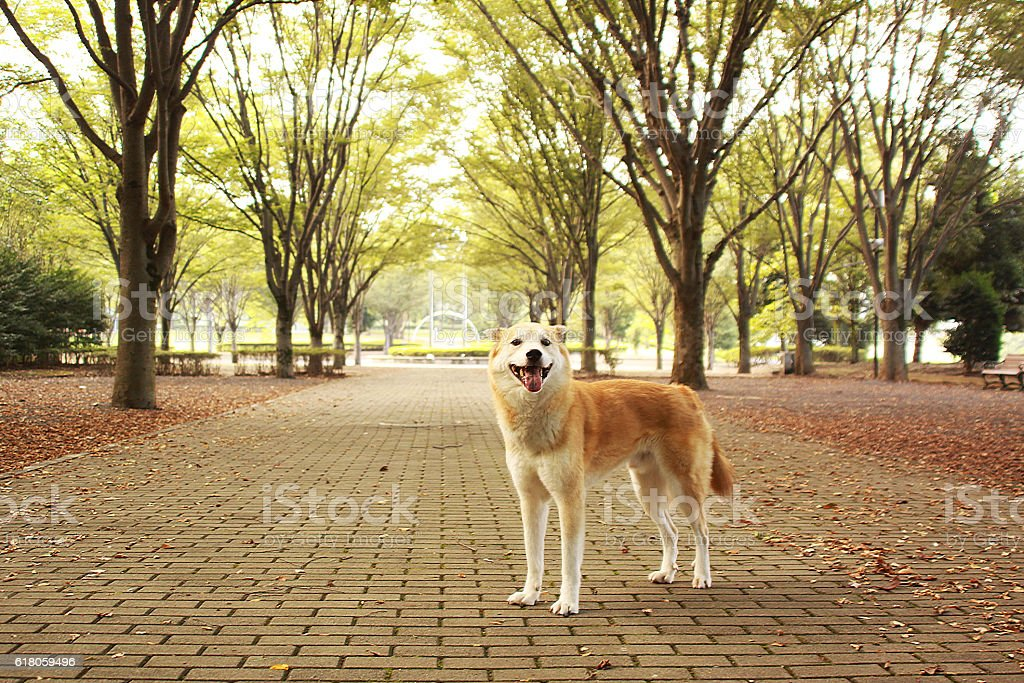 The dog in the park stock photo