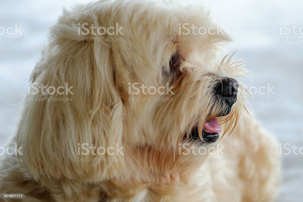 The dog is looking. stock photo
