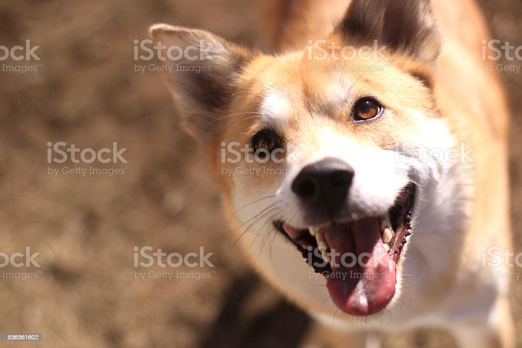 The dog  is smiling stock photo