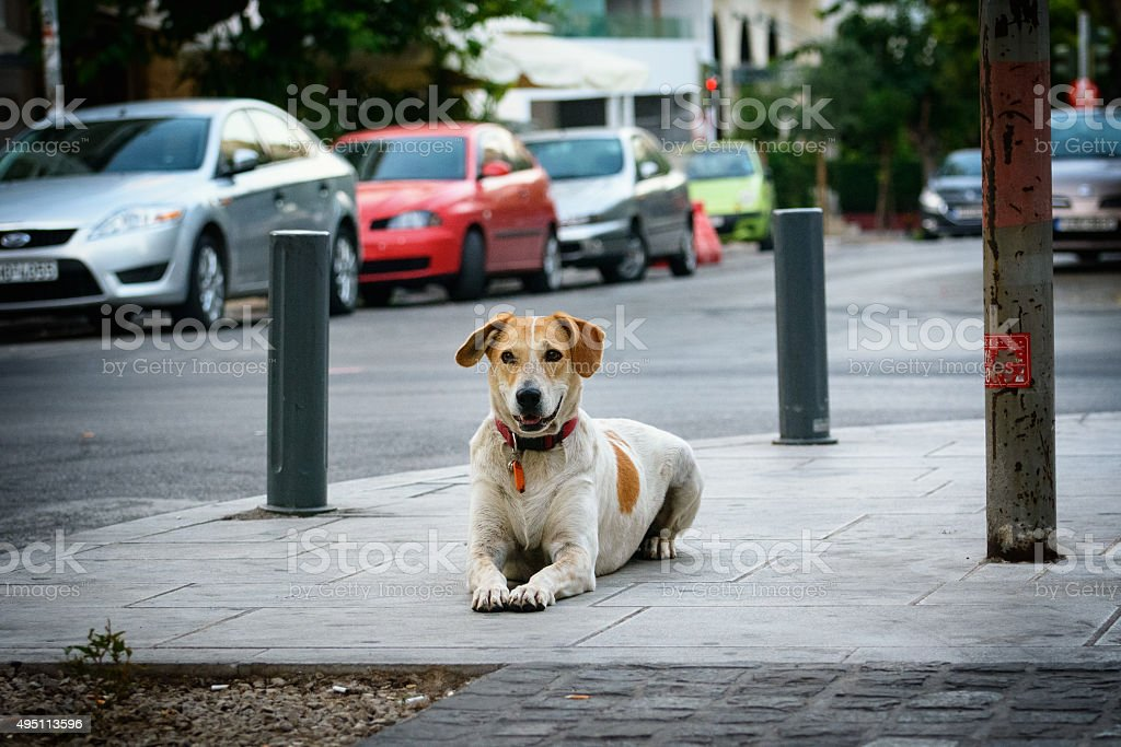 The dog lies in the street empty street of Athens stock photo