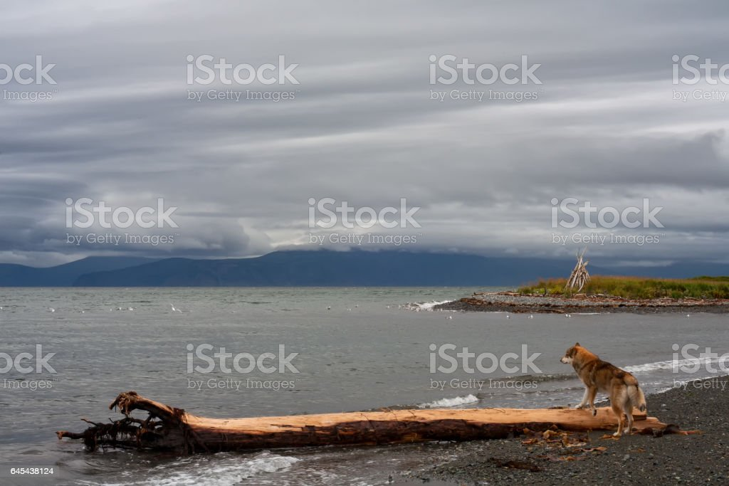 The dog on the beach. stock photo